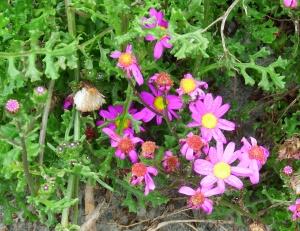 More pretty flowers.